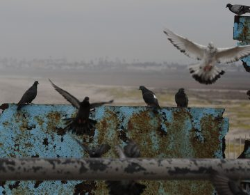 Birds fly and land on the U.S. border wall, seen from Tijuana, Mexico. Lawmakers in Washington are still finalizing a border security funding deal with more resources for physical barriers. (Rebecca Blackwell/AP)