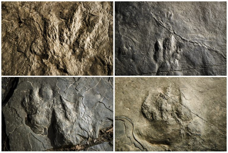 This Feb. 28, 2019, photo combination shows trace fossils on paving stones at the Valley Forge National Historical Park in Valley Forge, Pa. A volunteer at the park outside Philadelphia recently discovered dozens of fossilized footprints on flat rocks installed to pave a section of hiking trail. (Matt Rourke/AP Photo)