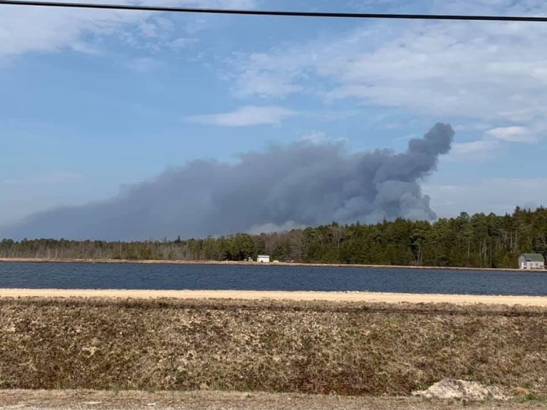 The New Jersey Forest Fire Service says the wildfire in a remote area near Spring Hill Road in Burlington County's Penn State Forest broke out early Saturday afternoon. (Courtesy of Amy Miller Shaman)