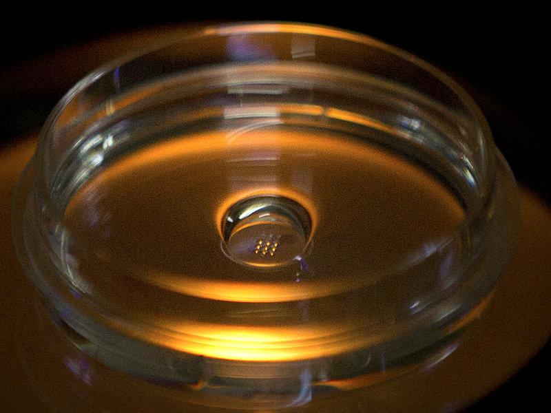 Call for global moratorium on creating gene-edited babies