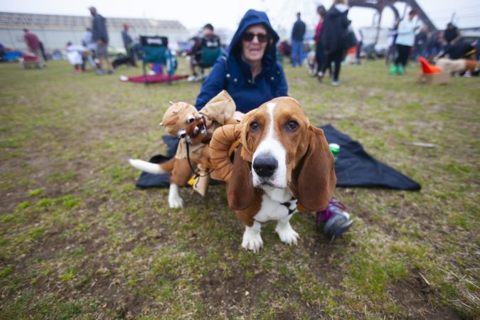 Nancy Meron and her dog, Miles, participate in the Tri-State Basset Hound Rescue picnic after the BoardWaddle on Saturday, April 13, 2019, in Atlantic City. (Miguel Martinez for WHYY)