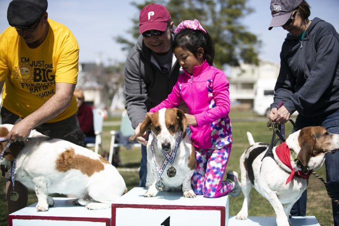 Mia Wagenberg places a medal on her dog, Buddy W, during the awards ceremony for the 15-meter hurdles at the Basset Hound Olympics in Ocean City. (Miguel Martinez for WHYY)