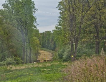 A Mariner East pipeline construction clearing in Delaware County. (Kimberly Paynter/WHYY)
