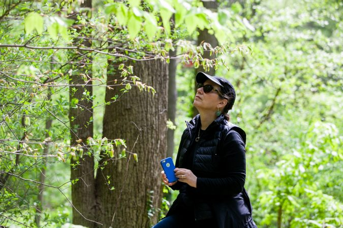 Vera Neumann-Sach of Bio Philly looks at plant species in the Wissahickon Valley Park during the City Nature Challenge Sunday. (Brad Larrison for WHYY)