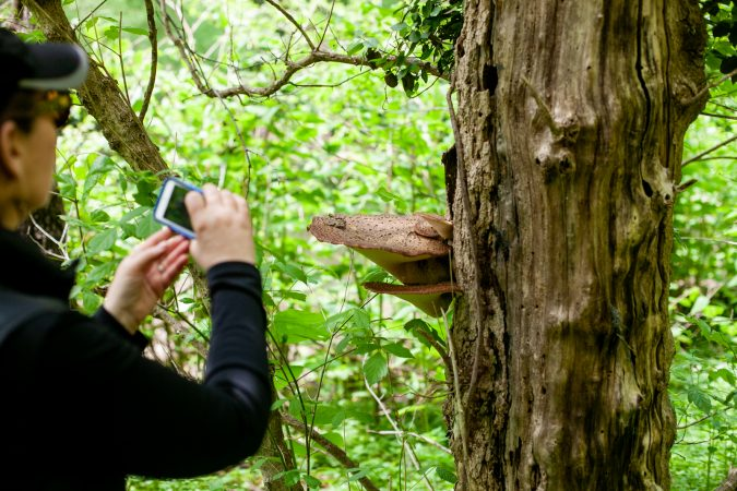 Vera Neumann-Sach of Bio Philly photographs a fungus in the Wissahickon Valley Park during the City Nature Challenge Sunday. (Brad Larrison for WHYY)