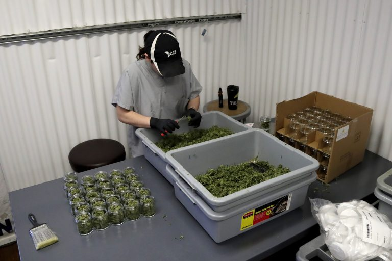 In this Friday, March 22, 2019 photo, Paige Dellafave-DeRosa, a processing supervisor at Compassionate Care Foundation's medical marijuana dispensary in Egg Harbor Township, N.J., sorts marijuana buds. (Julio Cortez/AP Photo)