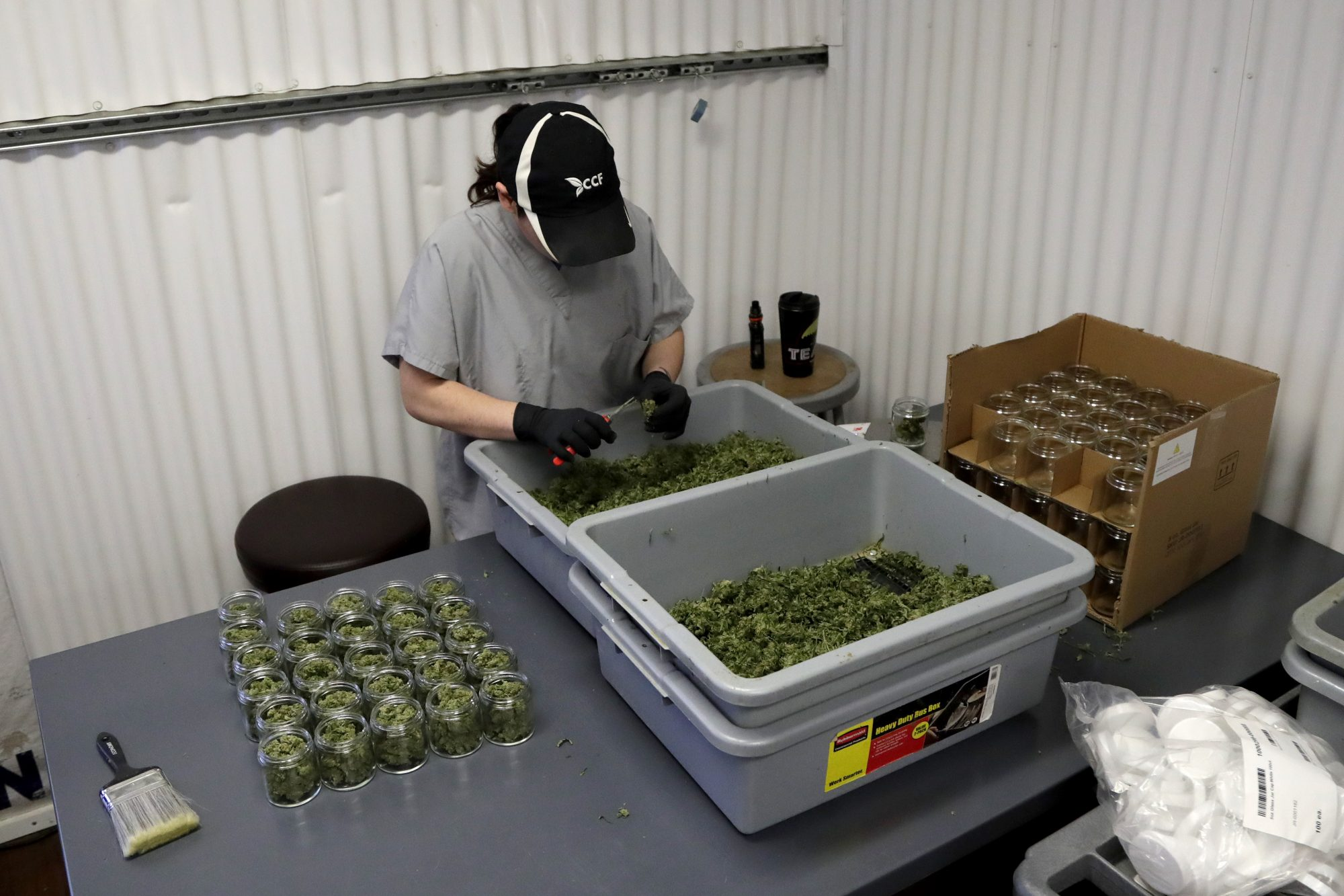 University of the Sciences launches MBA in medical cannabis, said to be first of its kind