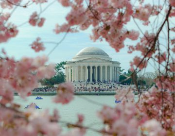 National Cherry Blossom Festival. (Photo Courtesy/Jeff Bogle)