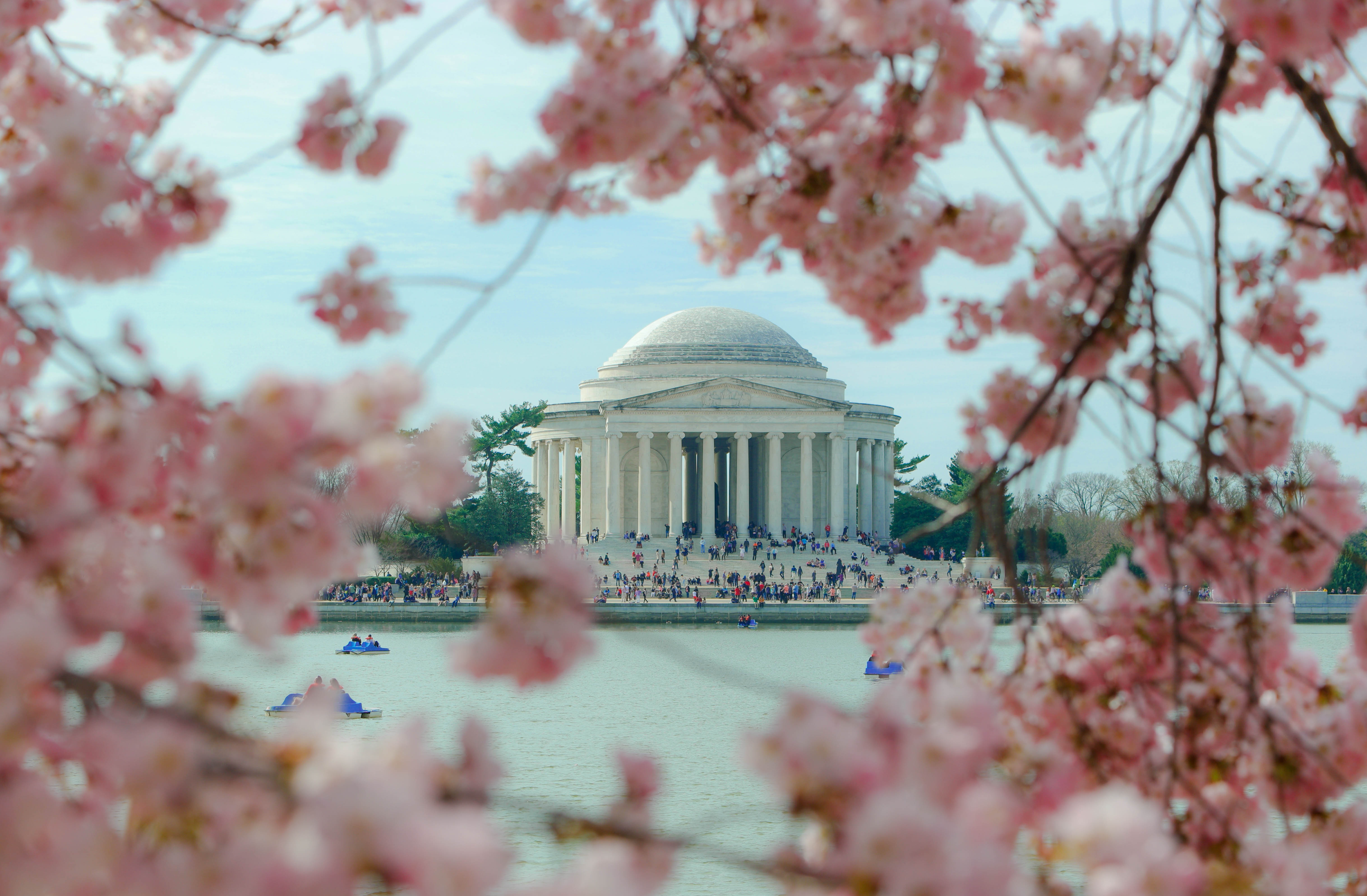 A Colorful Weekend Escape To The National Cherry Blossom Festival Whyy,Perennials Plant With Purple Flowers And Green Leaves