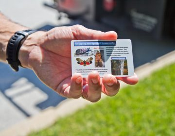 David Paar, owner of Arborescence in Montgomery County, hands out cards that help people spot the different stages of the spotted lantern fly. (Kimberly Paynter/WHYY)