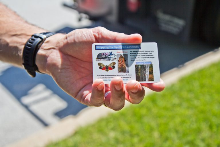 David Paar, owner of Arborescence in Montgomery County, hands out cards that help people spot the different stages of the spotted lanternfly. (Kimberly Paynter/WHYY)