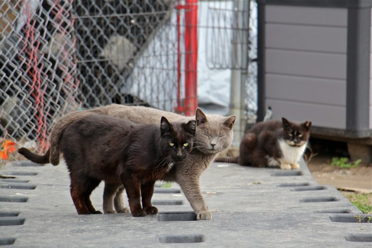 Philadelphia is home to 400,000 stray and feral cats. Those living in a managed colony are trapped, neutered and released back into the colony where they are fed and looked after by volunteers. (Emma Lee/WHYY)