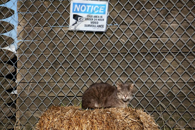 A feral cat suns itself in a cat colony that is watched over by the Delaware River Waterfront Corporation.