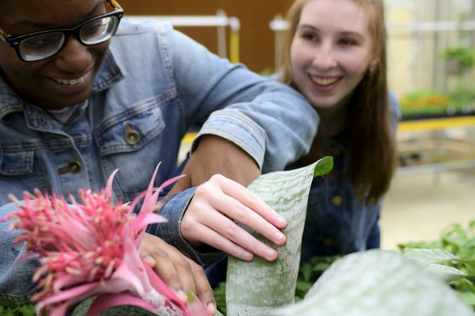 Shamirah Brown, 18 and Ashlee Preston, 19 feel the leaves of a tropical Aechmea fasciata or Urn plant at the new horticulture center for students who are blind, visually impaired or have other disabilities at the Overbrook School of the Blind, on Tuesday. (Bastiaan Slabbers for WHYY)