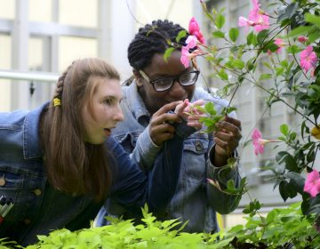 Ashlee Preston, 19, and Shamirah Brown, 18, explore plants at the new horticulture center for students who are blind, visually impaired or have other disabilities at the Overbrook School of the Blind, on Tuesday. (Bastiaan Slabbers for WHYY)