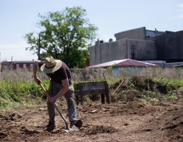 Willow Zef volunteers at the César Andreu Iglesias Community Garden, established by Philly Socialists in 2012 near Lawrence and Norris streets. (Angela Gervasi for WHYY)
