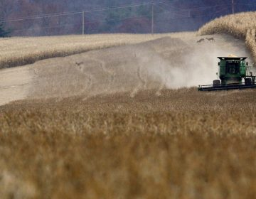 Daniel Melhorn drives his combine through a field of soybeans in Danville, Pa., Wednesday afternoon Nov. 12, 2008 as three whitetail deer move from one section of corn to another behind the harvester. (Jimmy May/Associated Press/Bloomsburg Press Enterprise)