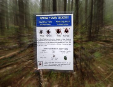 An informational card about ticks distributed by the Maine Medical Center Research Institute is seen in the woods in Freeport, Maine. (Robert F. Bukaty/AP Photo)