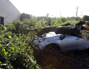 Downed tree limbs remain on cars outside a business Wednesday May 29, 2019 in Morgantown, Berks County. The National Weather Service says a tornado has been confirmed Tuesday in eastern Pennsylvania, where damage to some homes and businesses occurred, but there were no immediate reports of injuries. (Jacqueline Larma/AP Photo)