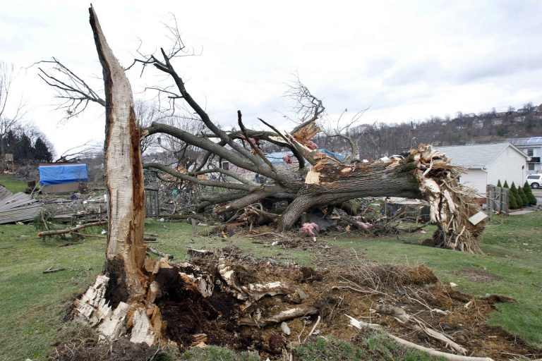 A large tree lays uprooted past the hole where it came from in a yard as people continue cleanup efforts, Thursday, March 24, 2011 in Hempfield, Pa. Severe storms went through the Westmoreland County area on Wednesday March 23, 2011, causing severe damage. The National Weather Service has confirmed that a tornado was responsible for destroying 30 homes and badly damaging about 60 more in western Pennsylvania. (Keith Srakocic)