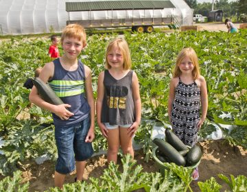 (From left) Jesse, Charolette and Willow Laux pick squash for communities in need at Duffield's Farm. (Kimberly Paynter/WHYY)