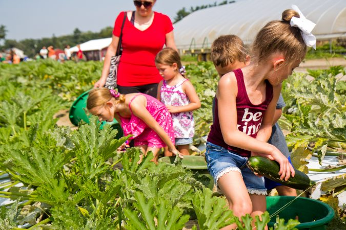 3rd graders from Washington Township in South New Jersey picked squash at Duffield's Farm for communities in need Wednesday morning. (Kimberly Paynter/WHYY)