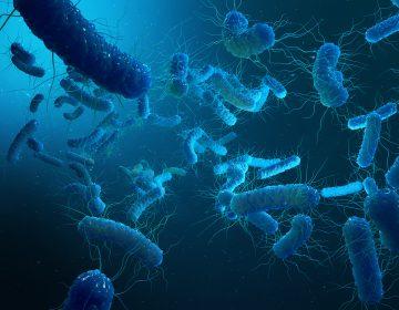 Enterobacterias Gram negativas Proteobacteria, bacteria such as salmonella, escherichia coli, yersinia pestis, klebsiella. 3D illustration