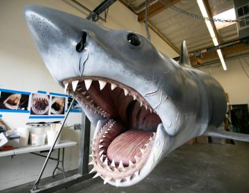 The Jaws shark