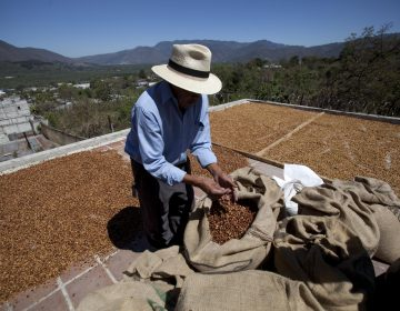 Small coffee producer Hector Perez dries coffee beans on his home's roof in San Gaspar Vivar, Guatemala, Saturday, Feb. 9, 2013. (AP Photo/Moises Castillo)