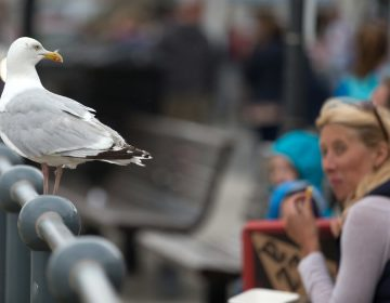A seagull watches as people eat at a seafront in England. (Matt Cardy/Getty Images)
