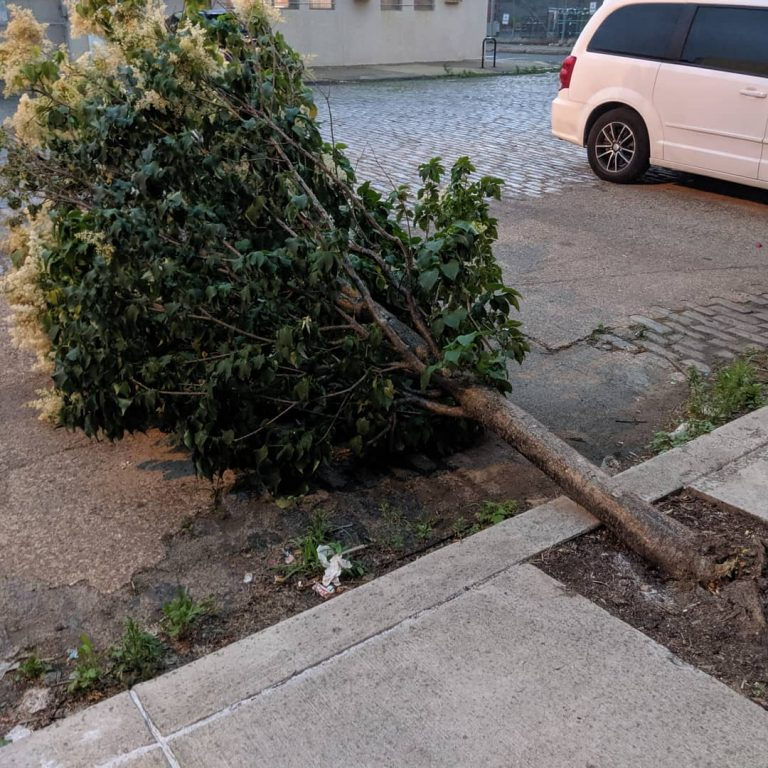 A tree down in East Kensington. (Courtesy of Philly Tree People)