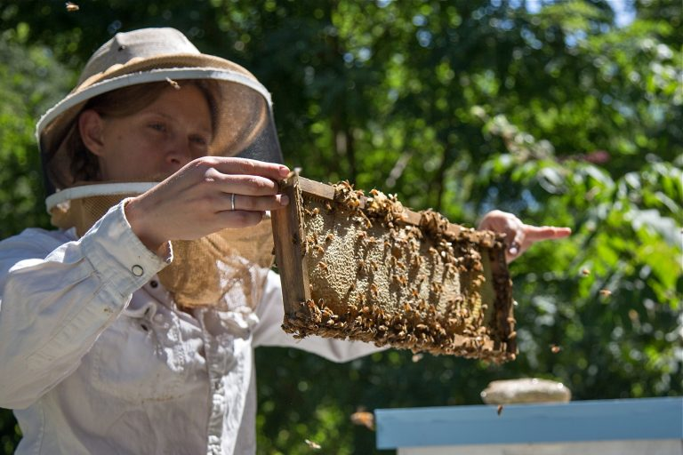 Sarah Plonski, president of the Philadelphia Beekeepers Guild, checks on one of the hives in the guild's apiary in the Awbury Agricultural Village in the Awbury Arboretum in Germantown.  (Emily Cohen for WHYY)