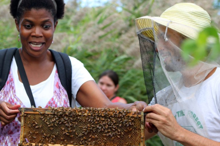 (Honey Festival/Sara Plonksi)