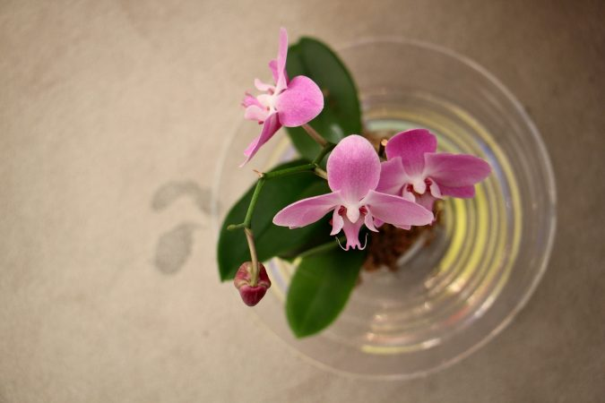 Orchids in the temple are placed under persistent leaks in the towering translucent roof, designed by Frank Lloyd Wright. (Emma Lee/WHYY)