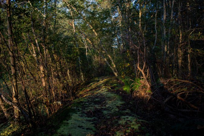 One of the many walking trails at the historic Whitesbog Village. (Becca Haydu for WHYY)