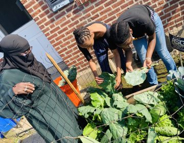 Gardeners work at Glover Gardens. (Courtesy of Hajjah Glover)