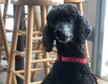 New legislation proposed in Delaware would permit restaurants like Irish Eyes Pub and Restaurant in Lewes to continue to allow dogs inside their patio areas. (Courtesy Irish Eyes Pub)