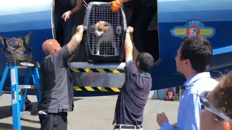 A dog is unloaded from a plane carrying 191 pets being evacuated from South Carolina to escape Hurricane Dorian. (Courtesy BVSPCA)
