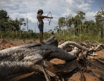 "In this Sept. 2, 2019 photo, seven-year-old Emilia Tembe pulls back on her hand-crafted toy bow and arrow made of sticks and leaves as she stands on a fallen tree, in the Ka 'a kyr village, Para state, Brazil. ""This part used to be a native forest. This was primary jungle. But the fire arrived and it cleared the land,"" said Emidio Tembe, Emilia's grandfather and the Ka' a kyr chieftain who named the village. (Rodrigo Abd/AP Photo)"
