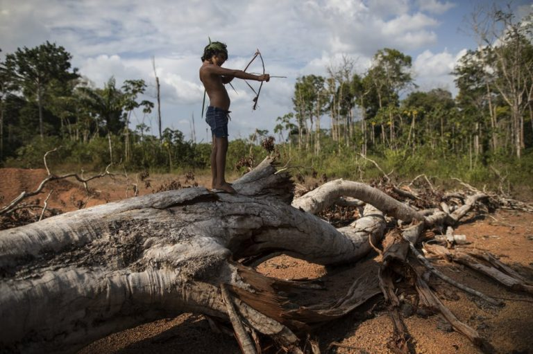 """In this Sept. 2, 2019 photo, seven-year-old Emilia Tembe pulls back on her hand-crafted toy bow and arrow made of sticks and leaves as she stands on a fallen tree, in the Ka 'a kyr village, Para state, Brazil. """"This part used to be a native forest. This was primary jungle. But the fire arrived and it cleared the land,"""" said Emidio Tembe, Emilia's grandfather and the Ka' a kyr chieftain who named the village. (Rodrigo Abd/AP Photo)"""