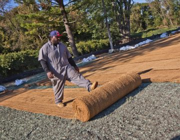 A worker lays out coir matting, which is made of coconutfiber that will break down in 2-3 years, but protect hydro seed from water erosion. (Kimberly Paynter/WHYY)