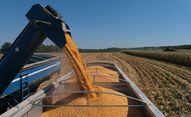 Harvested corn is unloaded into a truck Sept. 25, 2019, at Cairns Family Farm in Sadsbury Township, Pennsylvania. (Matt Smith for Keystone Crossroads)