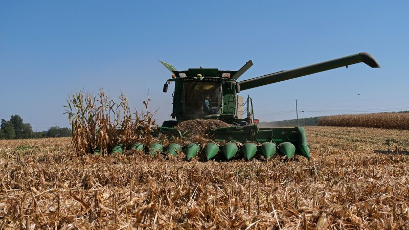 Derrick Weaver, of New Holland, drives a combine to harvest corn Sept. 25, 2019, at Cairns Family Farm in Sadsbury Township, Pennsylvania. (Matt Smith for Keystone Crossroads)