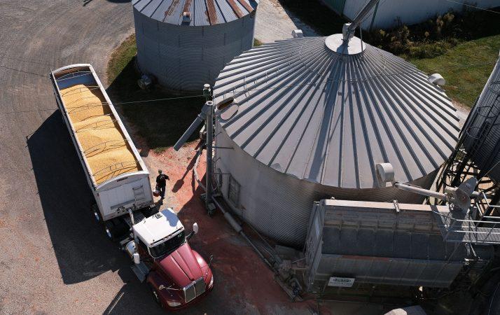 Soybeans grow on land farmed by grain farmer Mike Braucher on Sept. 20, 2019, at Braucher Farms in Centre Township, Pennsylvania. (Matt Smith for Keystone Crossroads)