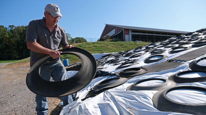 Dairy farmer Duane Hershey covers a pile of bedding for cows converted from cow waste and filtered and converted in an effort to reuse materials Sept. 25, 2019, at Ar-Joy Farms in West Fallowfield Township, Pennsylvania. (Matt Smith for Keystone Crossroads)