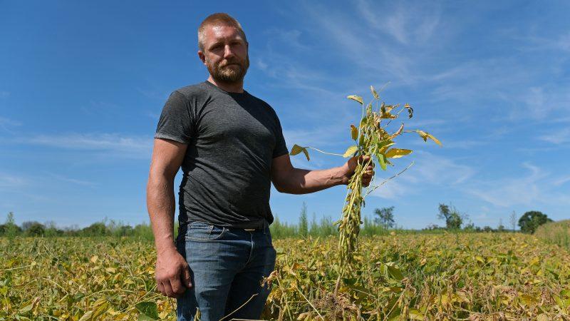 Grain farmer Jesse Poliskiewicz holds stems of soybeans while on his farm Sept. 20, 2019, in Upper Mount Bethel Township, Pennsylvania. (Matt Smith for Keystone Crossroads)
