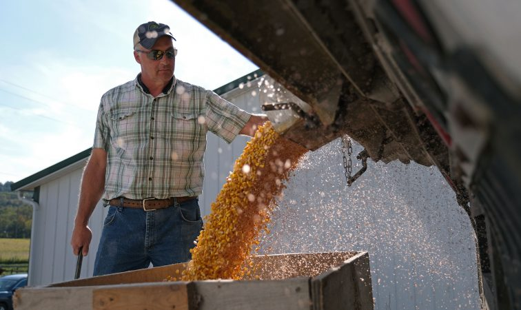 Grain farmer Mike Braucher works on unloading harvested corn Sept. 27, 2019, at Braucher Farms in Centre Township, Pennsylvania. (Matt Smith for Keystone Crossroads)