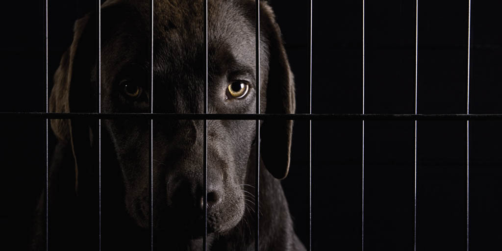 Is a dog crate really a den? How this very American practice took off