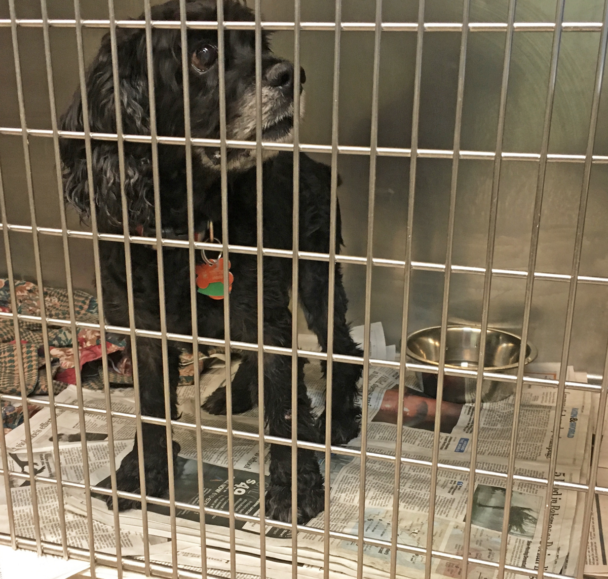 Is A Dog Crate Really A Den How This Very American Practice Took Off Whyy