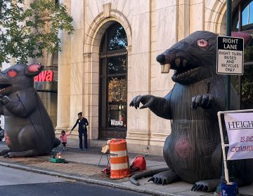 Inflatable union rats were set up at 6th and Chestnut for weeks before the developer filed an injunction against them. (Michaela Winberg / Billy Penn)